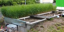 Creazione di impianti per la fitodepurazione